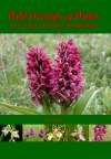 Wild Orchids of the Algarve