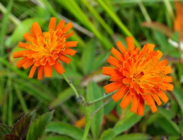 Permalink to Orange Flower Identification